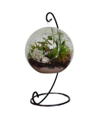 Globe Hanging Terratium