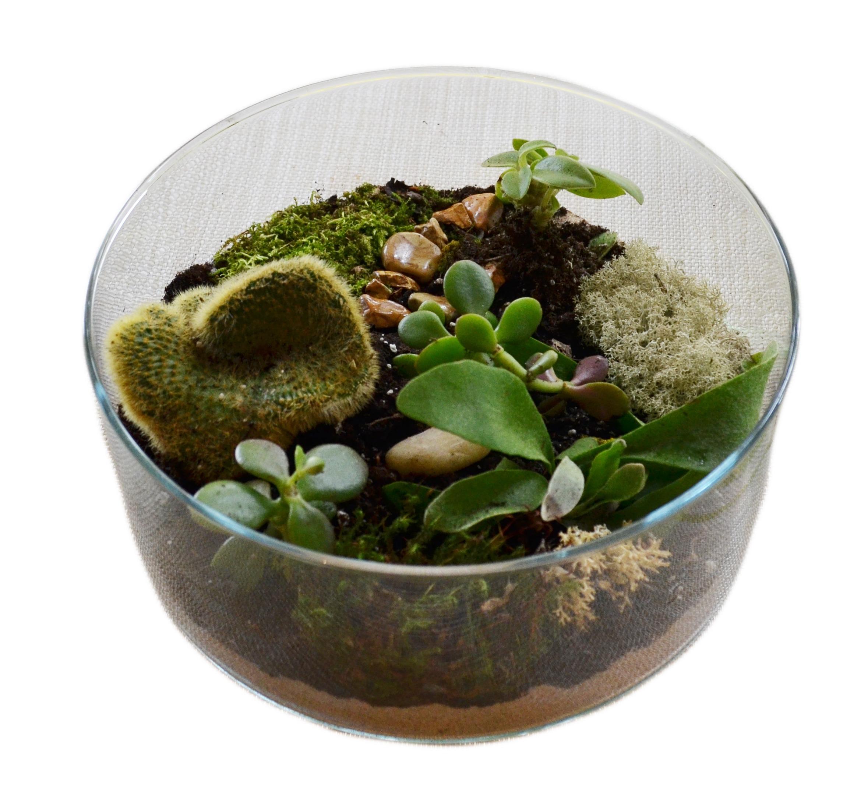 Glass Planter Custom Gifts Toronto Flat Terrarium Mini Desert